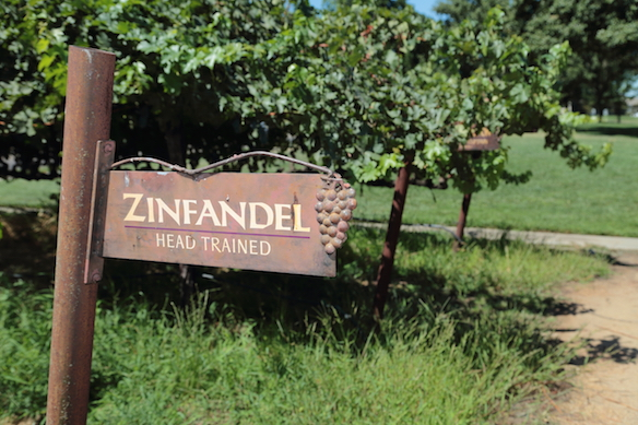 best Zinfandel wine kits
