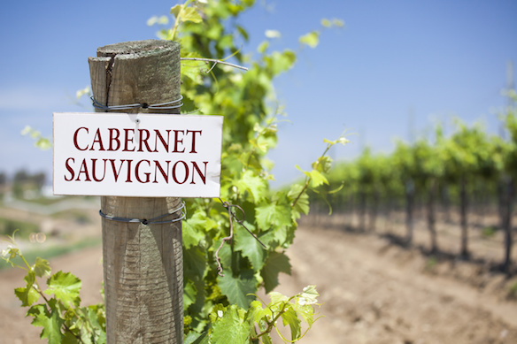 Cabernet Sauvignon Sign On Post at the End of a Vineyard Row of Grapes.